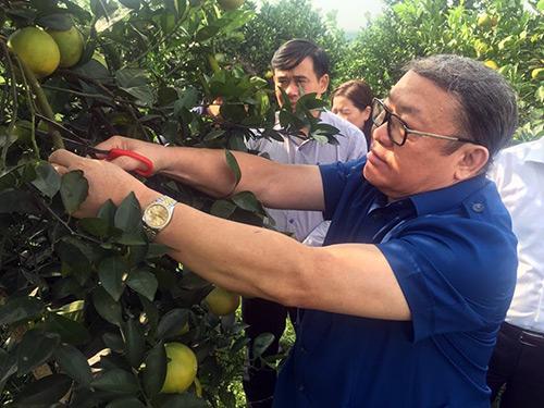 Chủ tịch Hội NDVN: Hỗ trợ nông dân nhân rộng mô hình hay