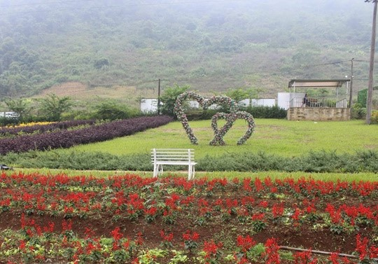 Thung lũng trăm hoa khoe sắc phát hờn của trai 'khùng' Yên Bái