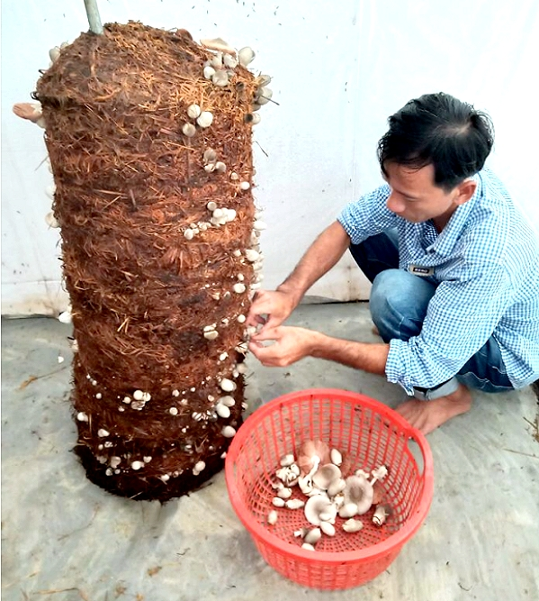 Lạ mà hay: Trồng nấm rơm dạng trụ, nấm mọc la liệt bán lại đắt